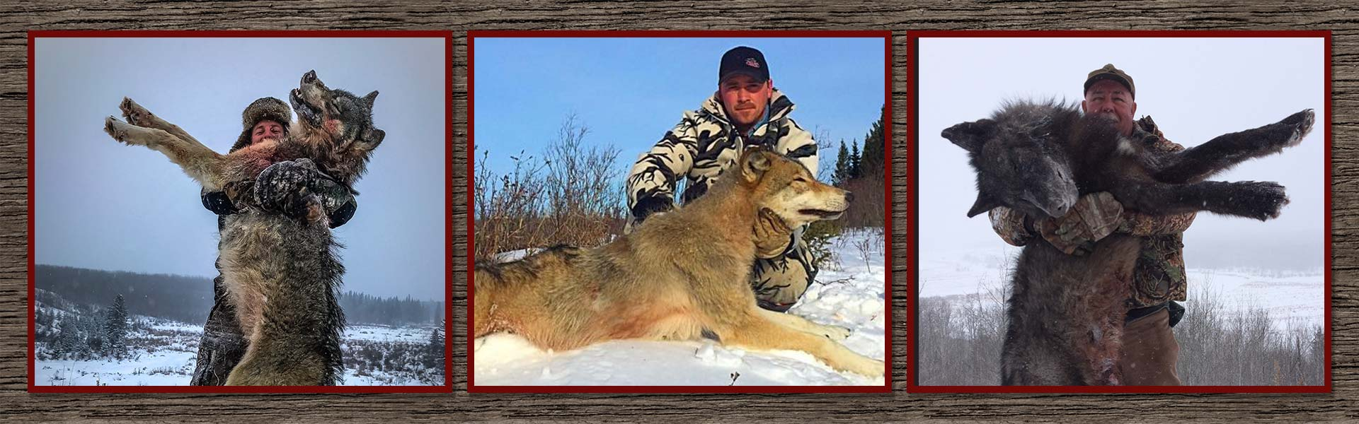 Alberta Wolf & Coyote Hunts